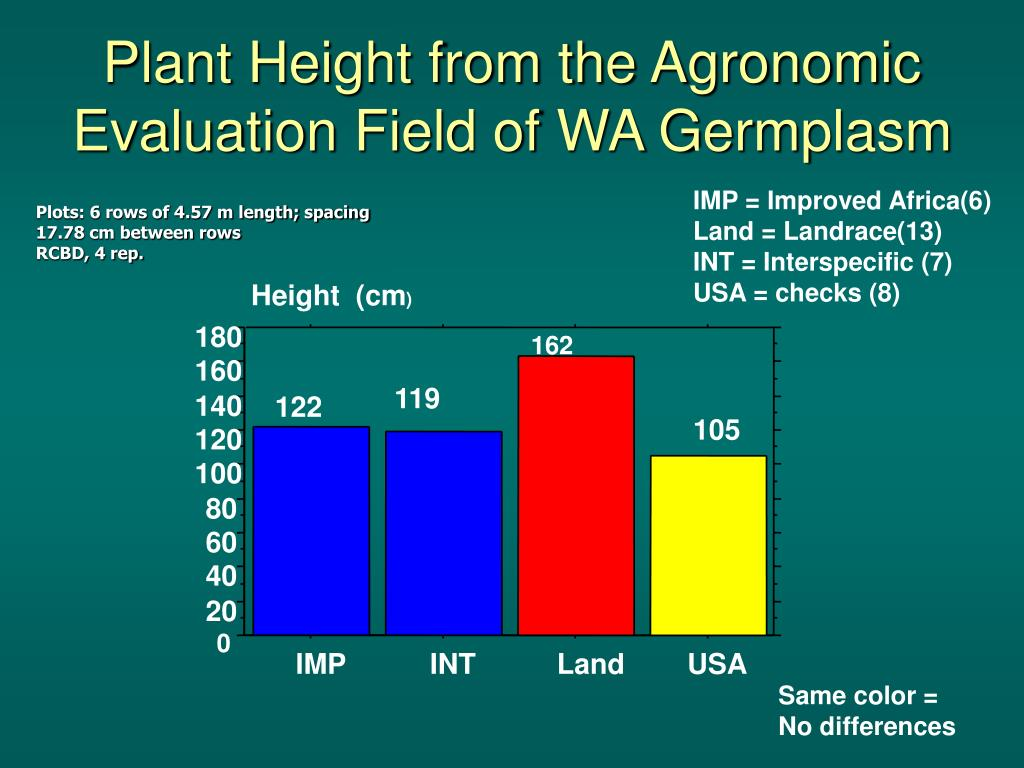 Plant Height from the Agronomic Evaluation Field of WA Germplasm