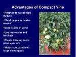 advantages of compact vine