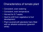 characteristics of tomato plant