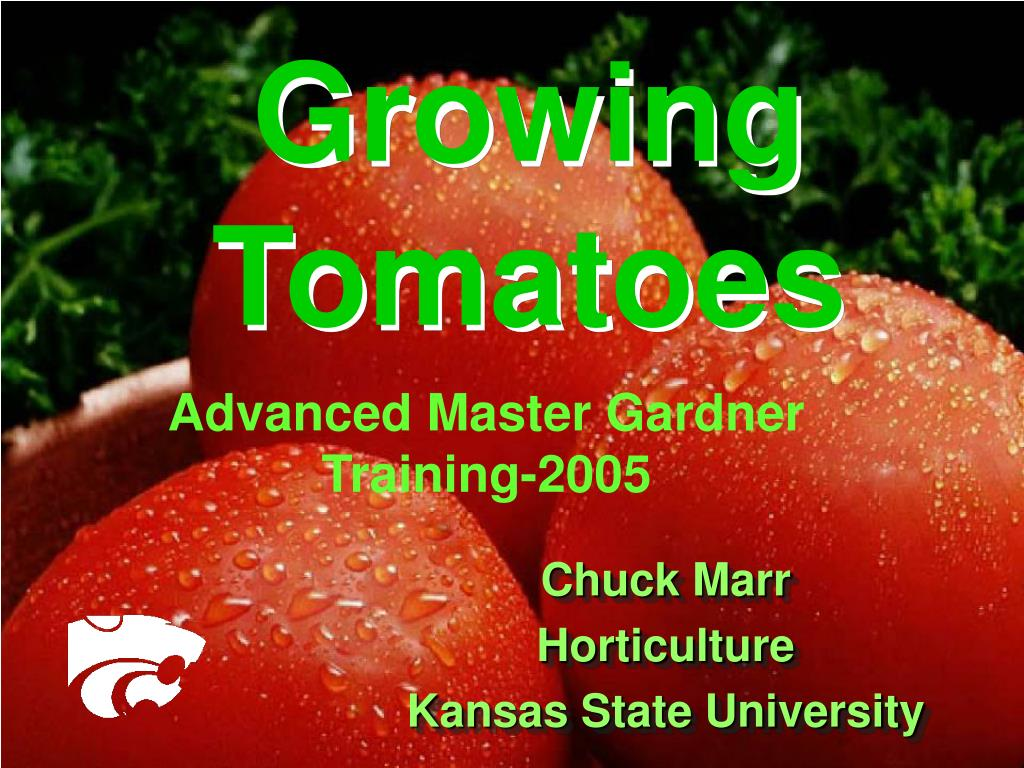 growing tomatoes l.