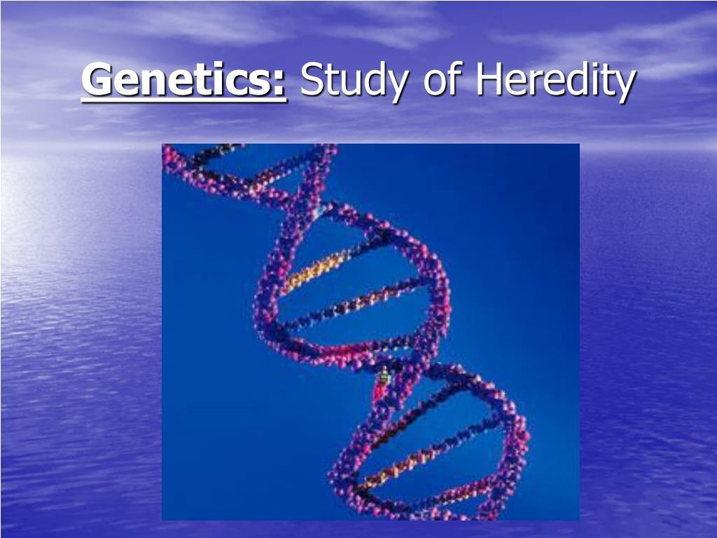 genetics study of heredity l.