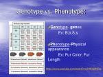 genotype vs phenotype