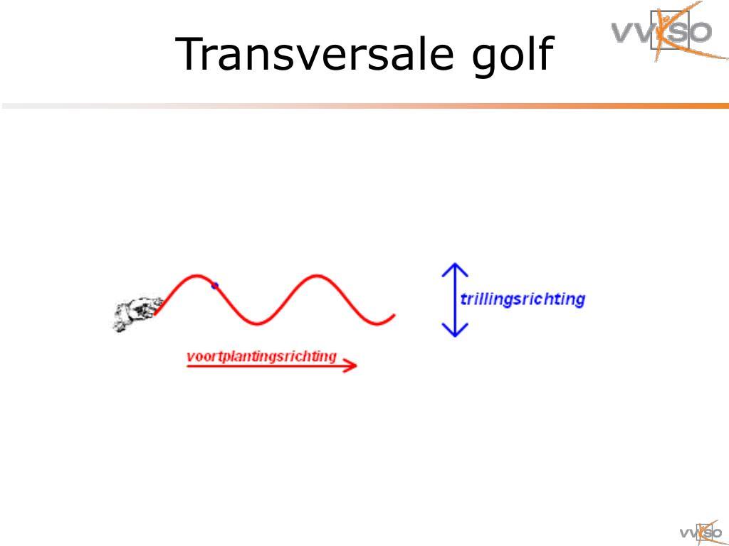 Transversale golf