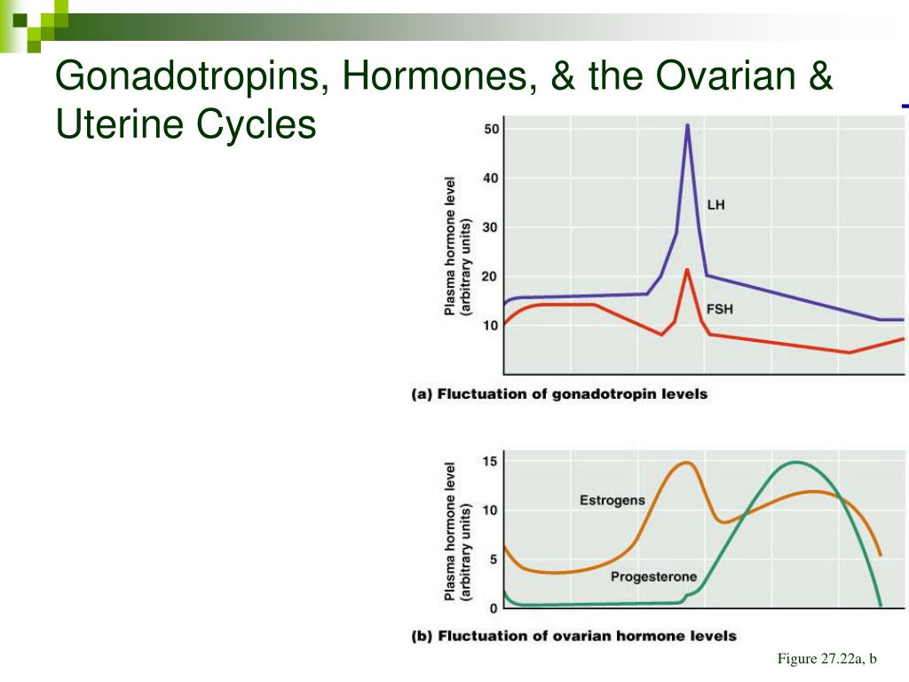 Gonadotropins, Hormones, & the Ovarian & Uterine Cycles