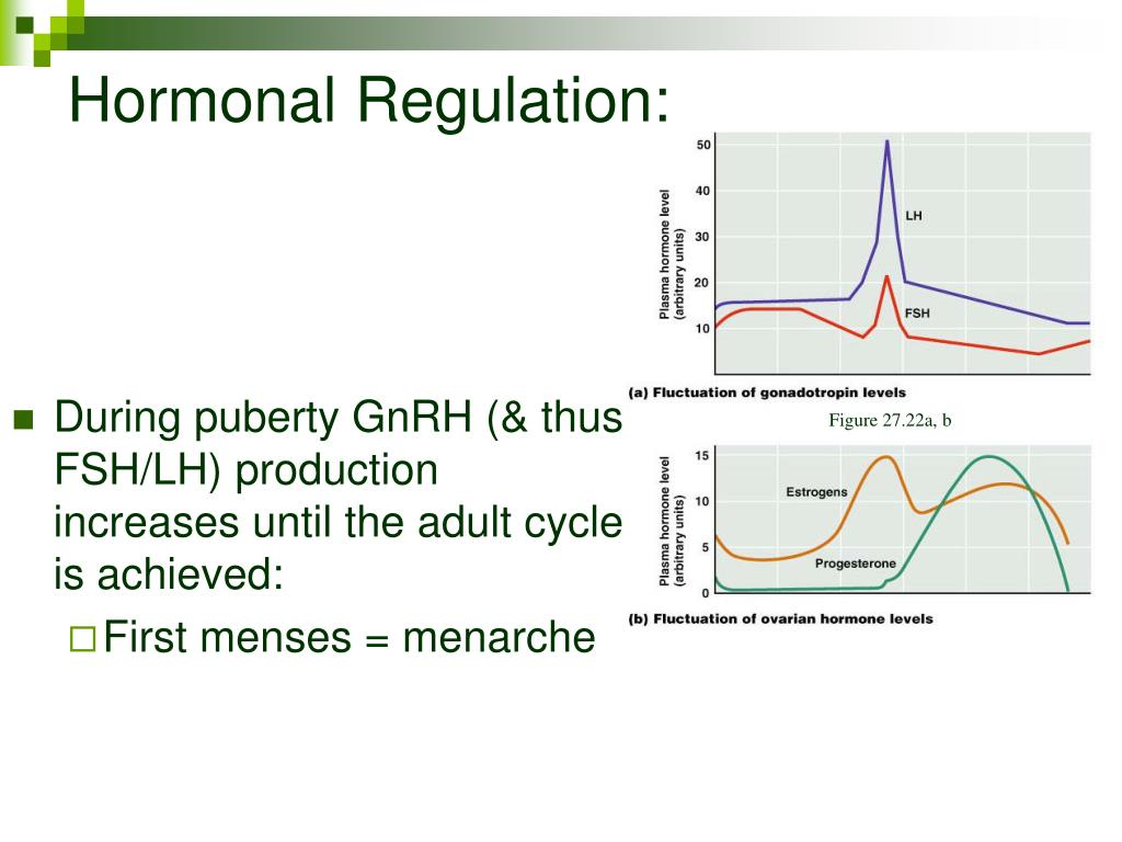 Hormonal Regulation: