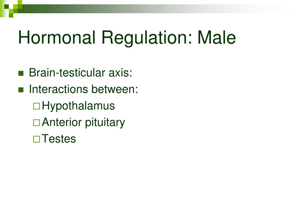 Hormonal Regulation: Male