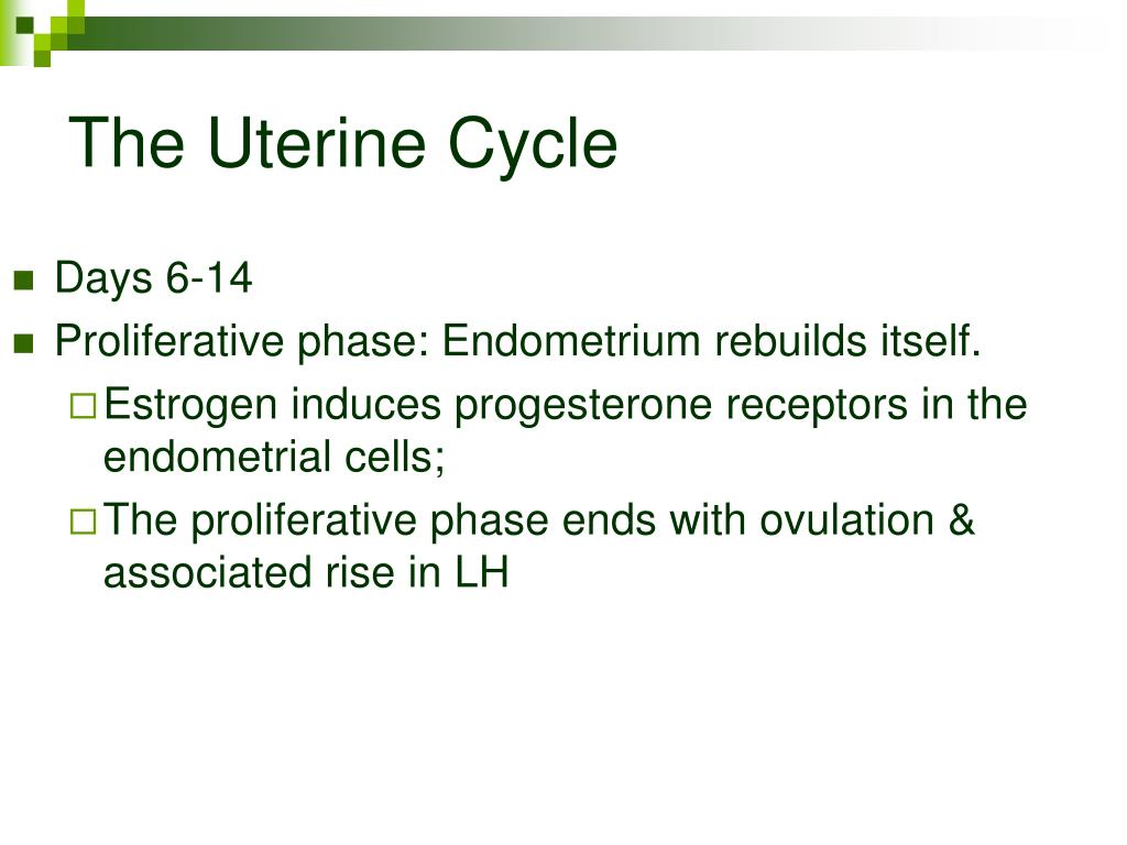 The Uterine Cycle
