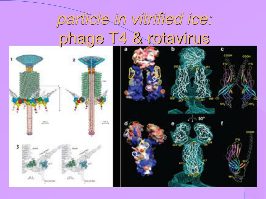 particle in vitrified ice: