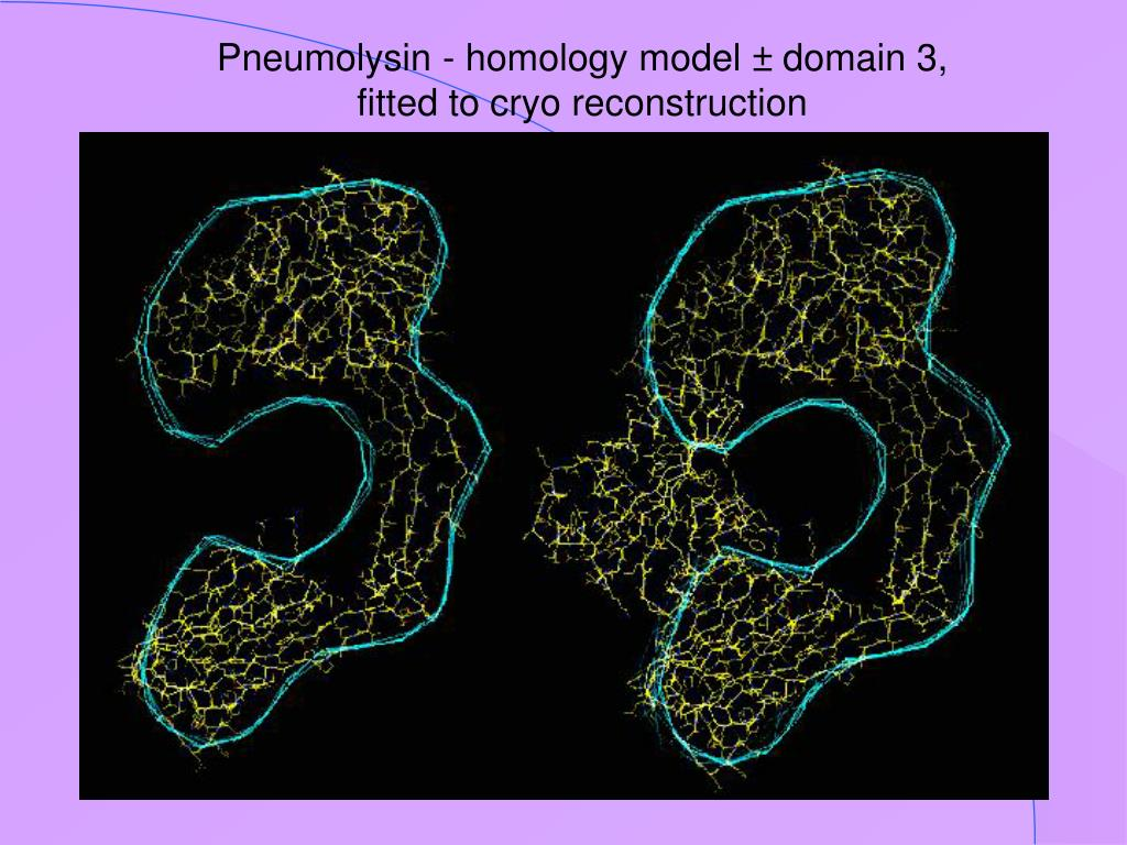 Pneumolysin - homology model ± domain 3, fitted to cryo reconstruction