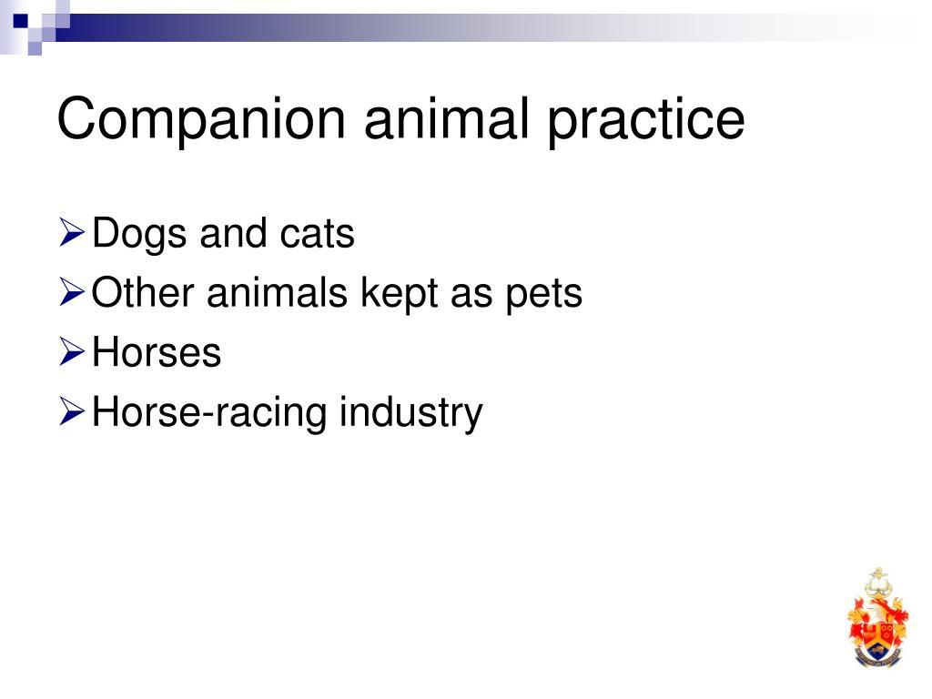 Companion animal practice