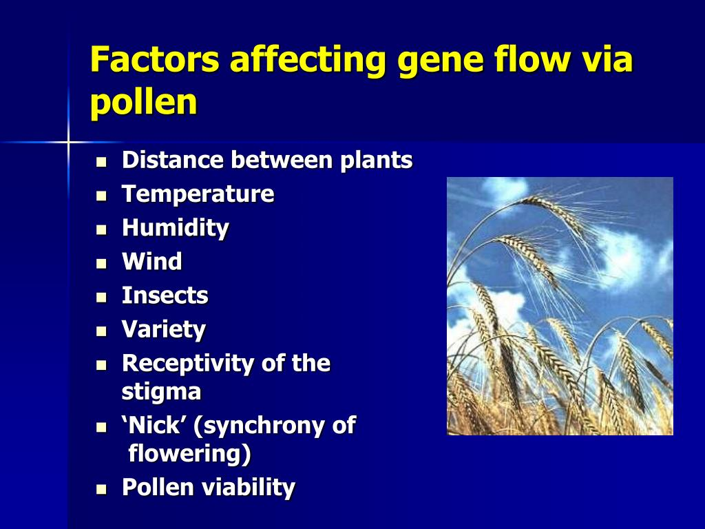 Factors affecting gene flow via pollen