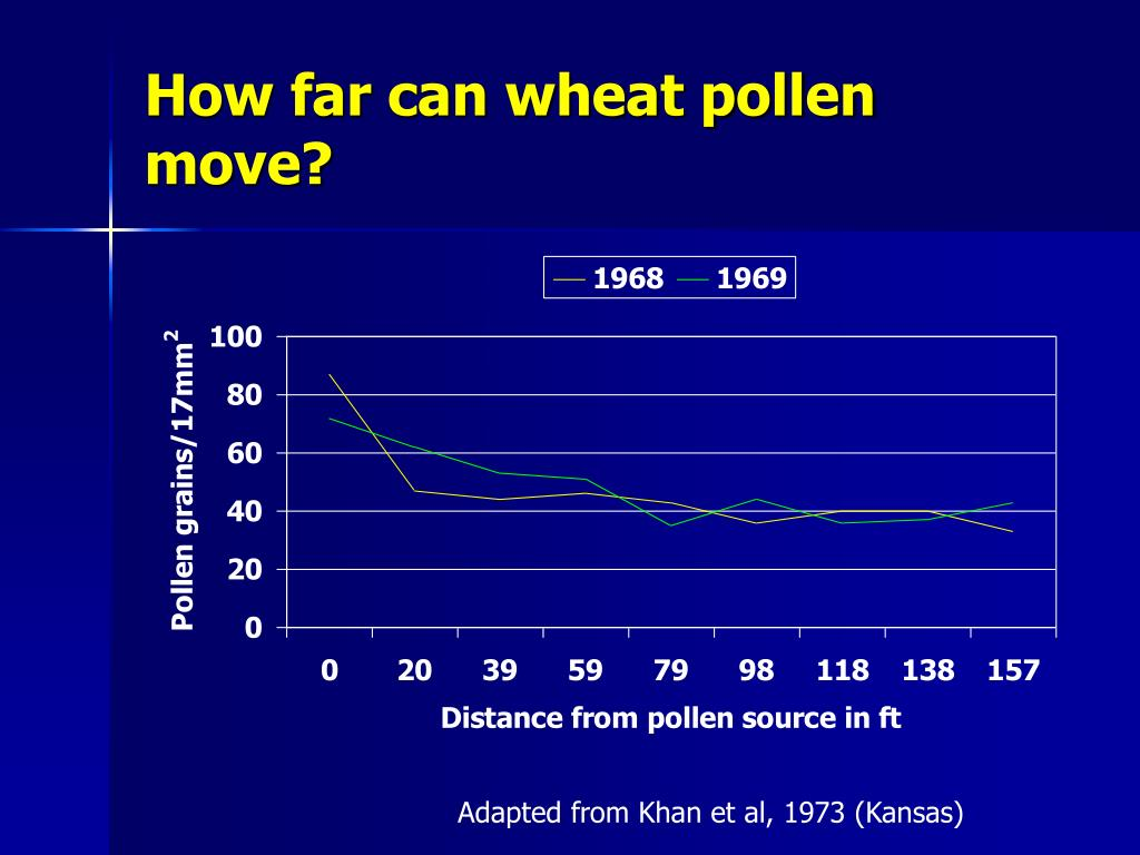 How far can wheat pollen move?