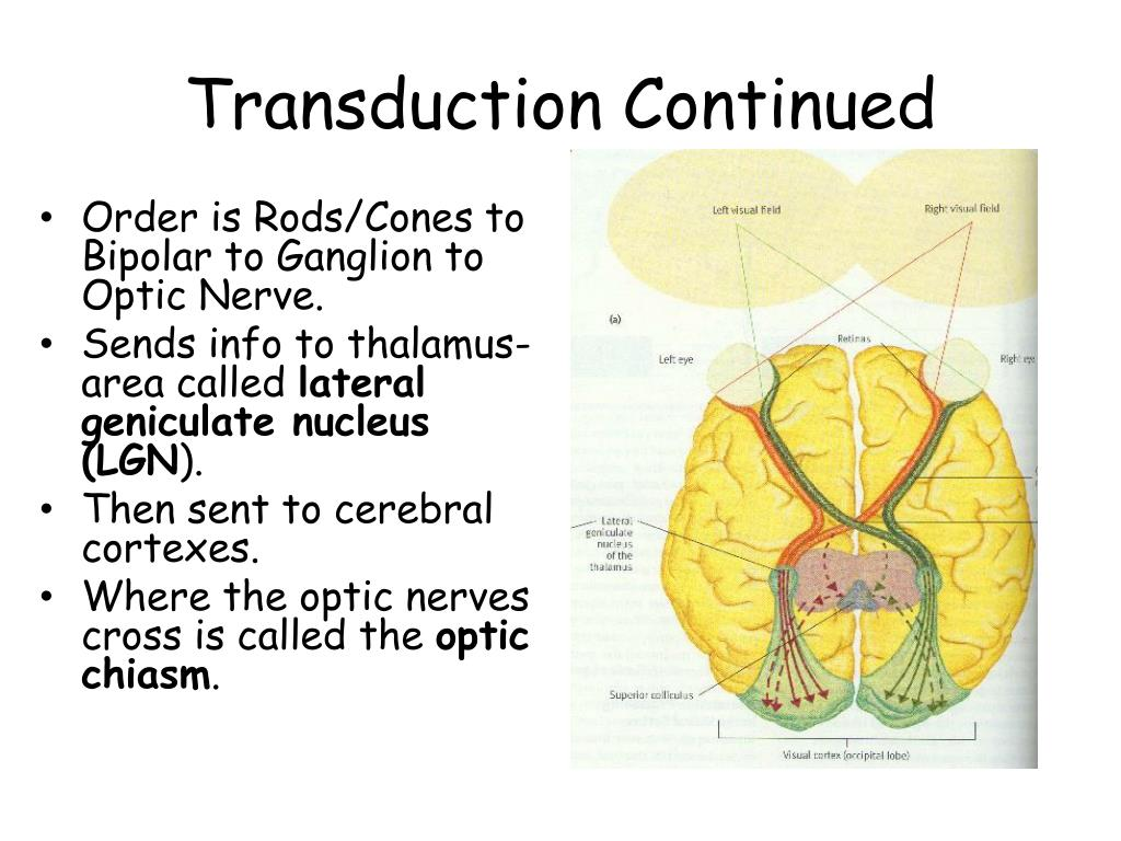 Transduction Continued