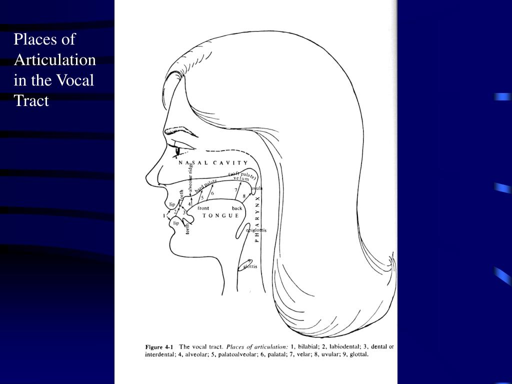Places of Articulation in the Vocal Tract