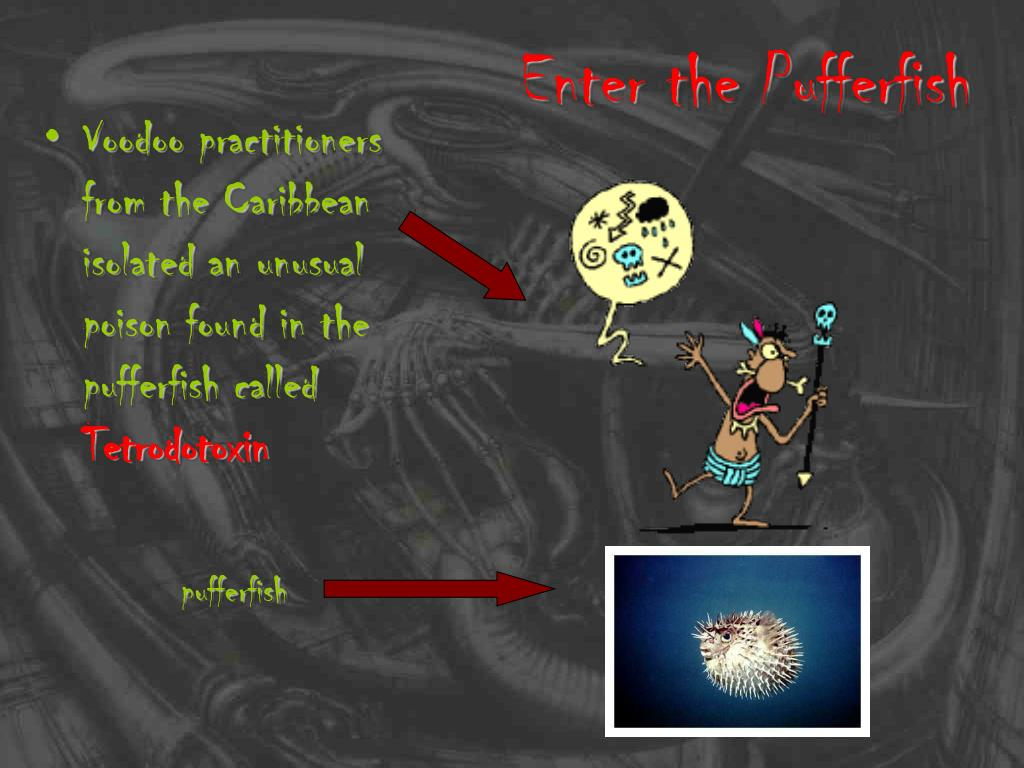 Enter the Pufferfish