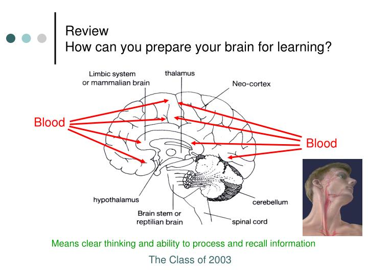 Review how can you prepare your brain for learning