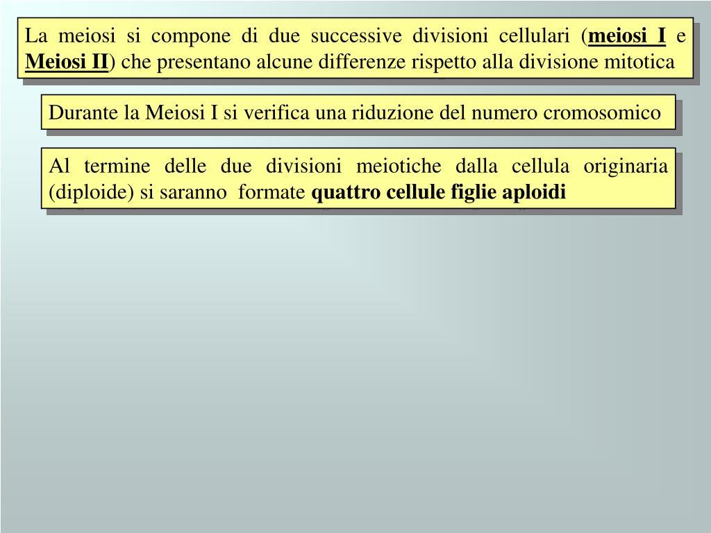 La meiosi si compone di due successive divisioni cellulari (