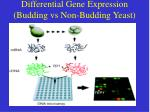 differential gene expression budding vs non budding yeast