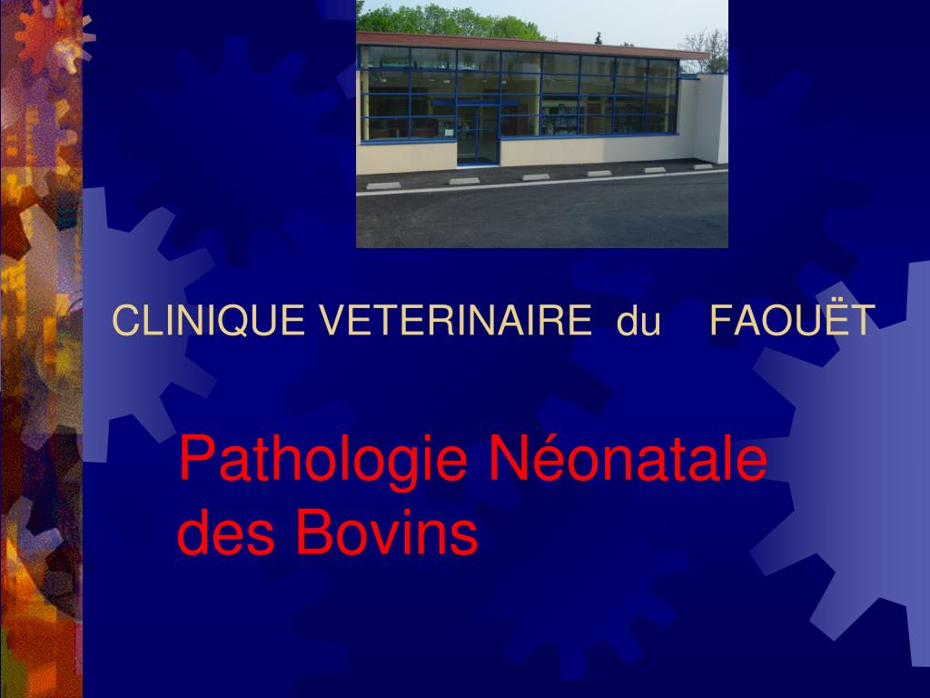 clinique veterinaire du faou t