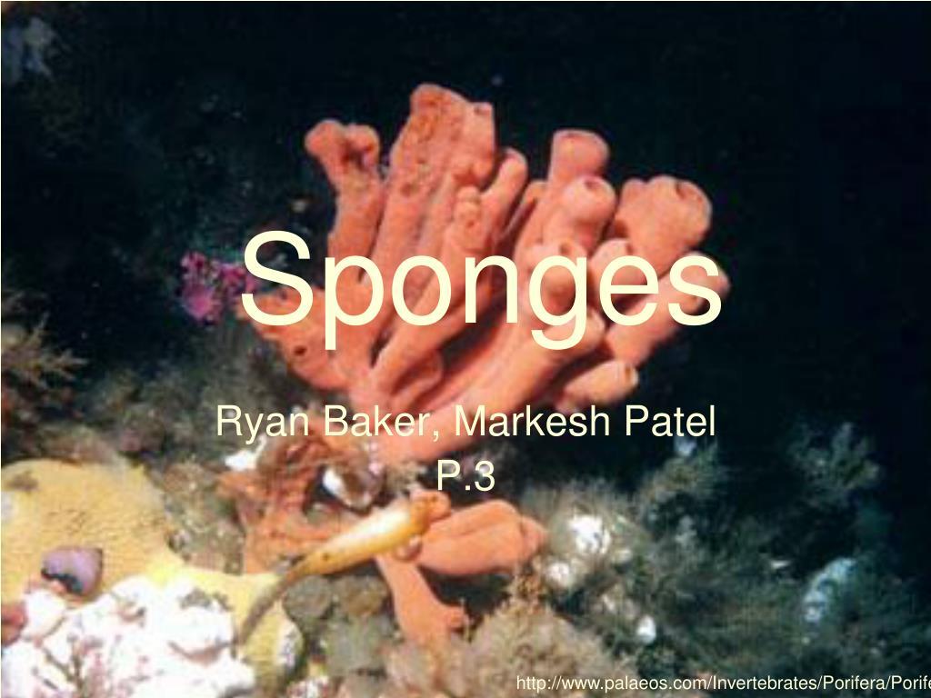 Ppt sponges powerpoint presentation id568967 reviewsmspy