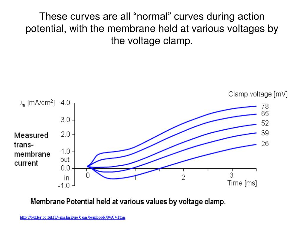 """These curves are all """"normal"""" curves during action potential, with the membrane held at various voltages by the voltage clamp."""