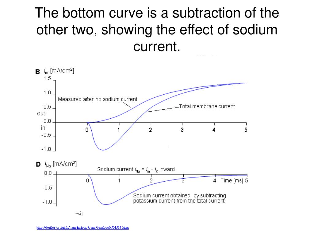 The bottom curve is a subtraction of the other two, showing the effect of sodium current.