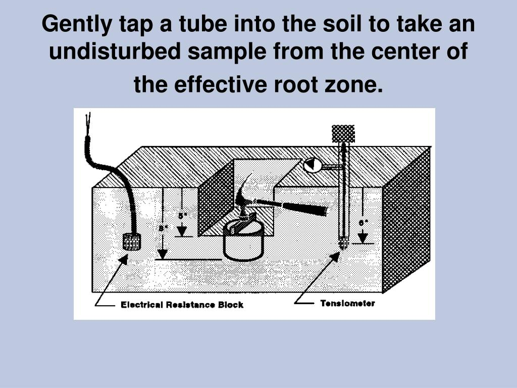 Gently tap a tube into the soil to take an undisturbed sample from the center of the effective root zone.