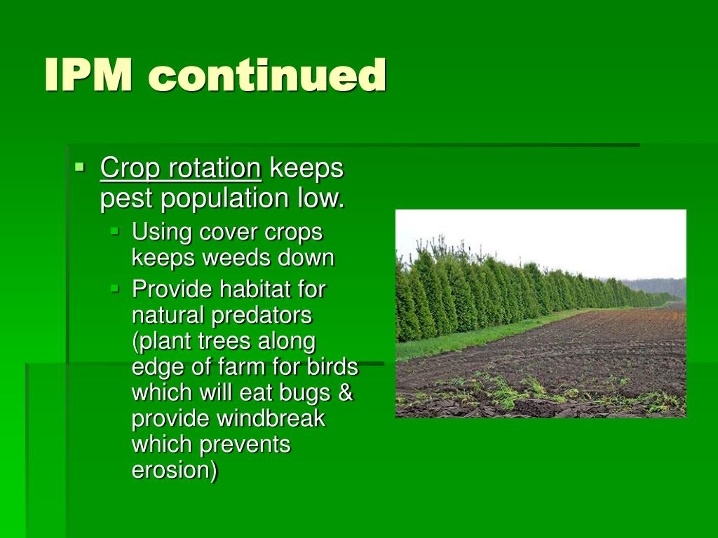 IPM continued