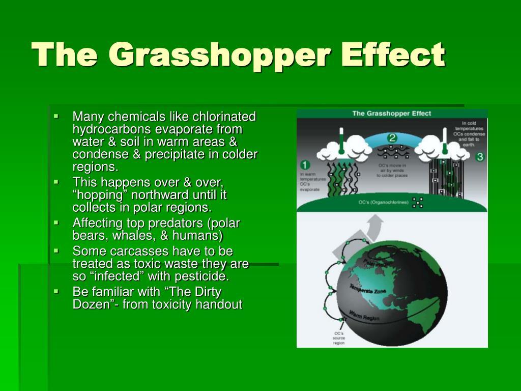 The Grasshopper Effect