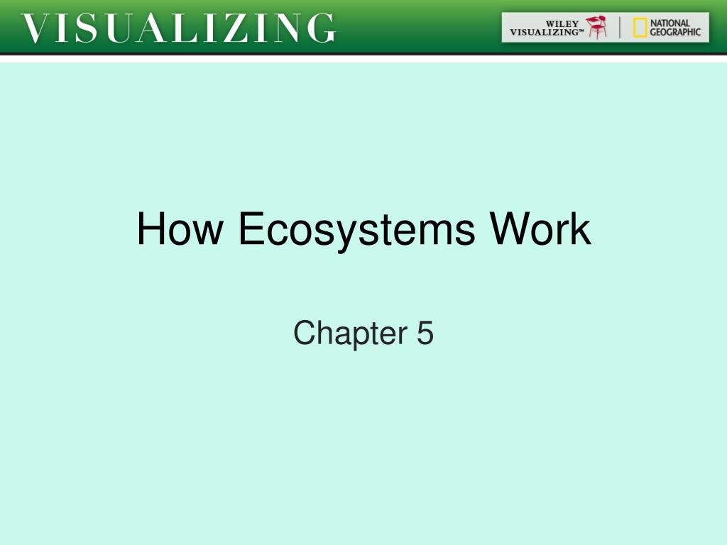how ecosystems work l.