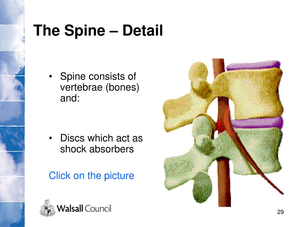The Spine – Detail