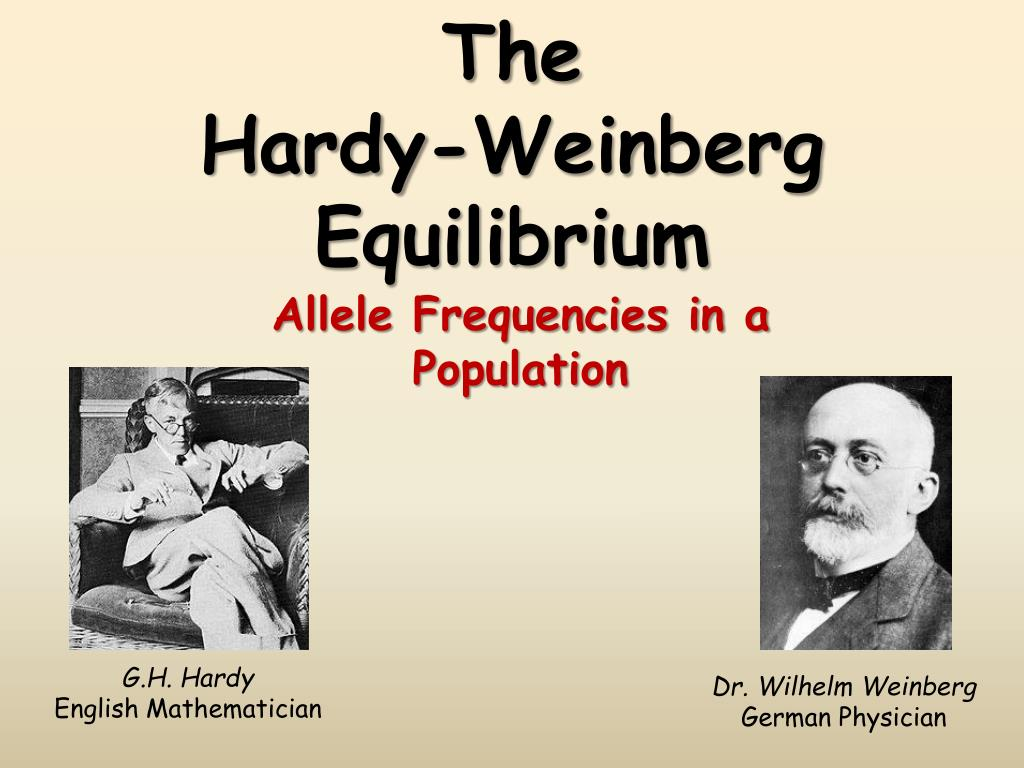 hardy weinburg equilibrium The hardy-weinberg equilibrium the hardy-weinberg equilibium, which is also known as the panmictic equilibrium, was discovered at the beginning of the 20th century by several researchers, notably by hardy, a mathematician and weinberg, and physician.