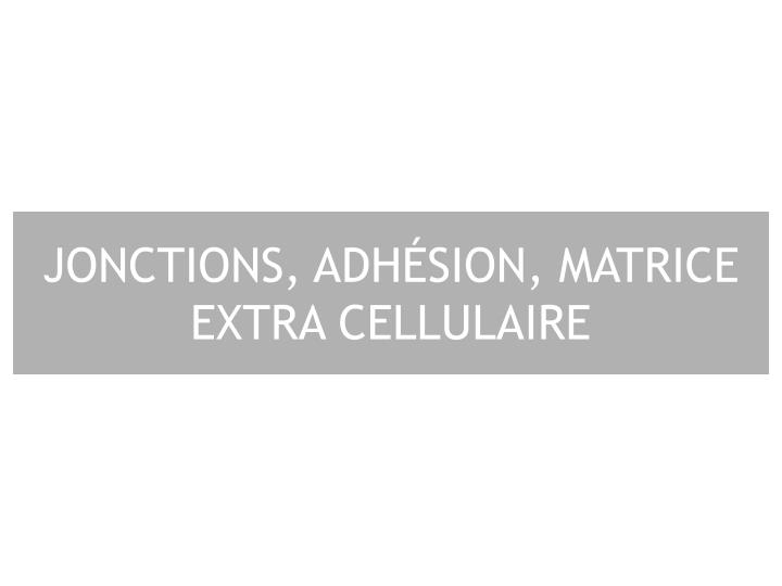 jonctions adh sion matrice extra cellulaire n.