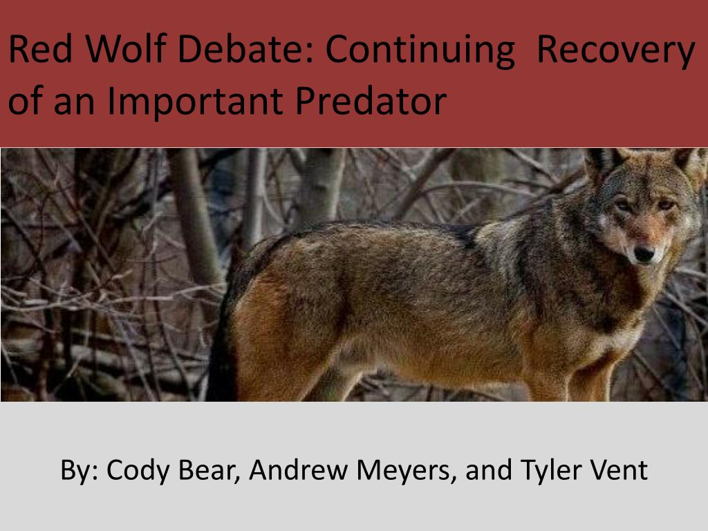 red wolf debate continuing recovery of an important predator l.