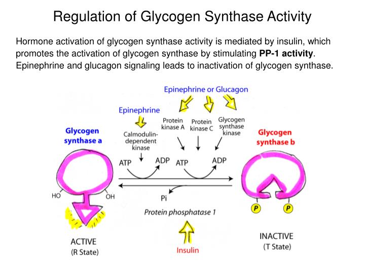 glycogen resynthesis Claims alleviate low-back pain and improve range of motion assist with shorter, easier labor for expectant mothers and shorten maternity hospital stays.