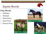 equine breeds10