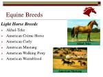 equine breeds13
