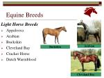 equine breeds14