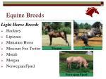 equine breeds15