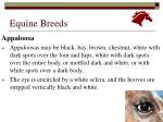 equine breeds20