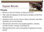 equine breeds23
