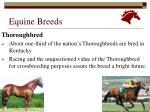 equine breeds27