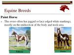equine breeds29