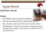 equine breeds4