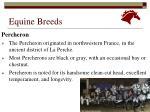 equine breeds7