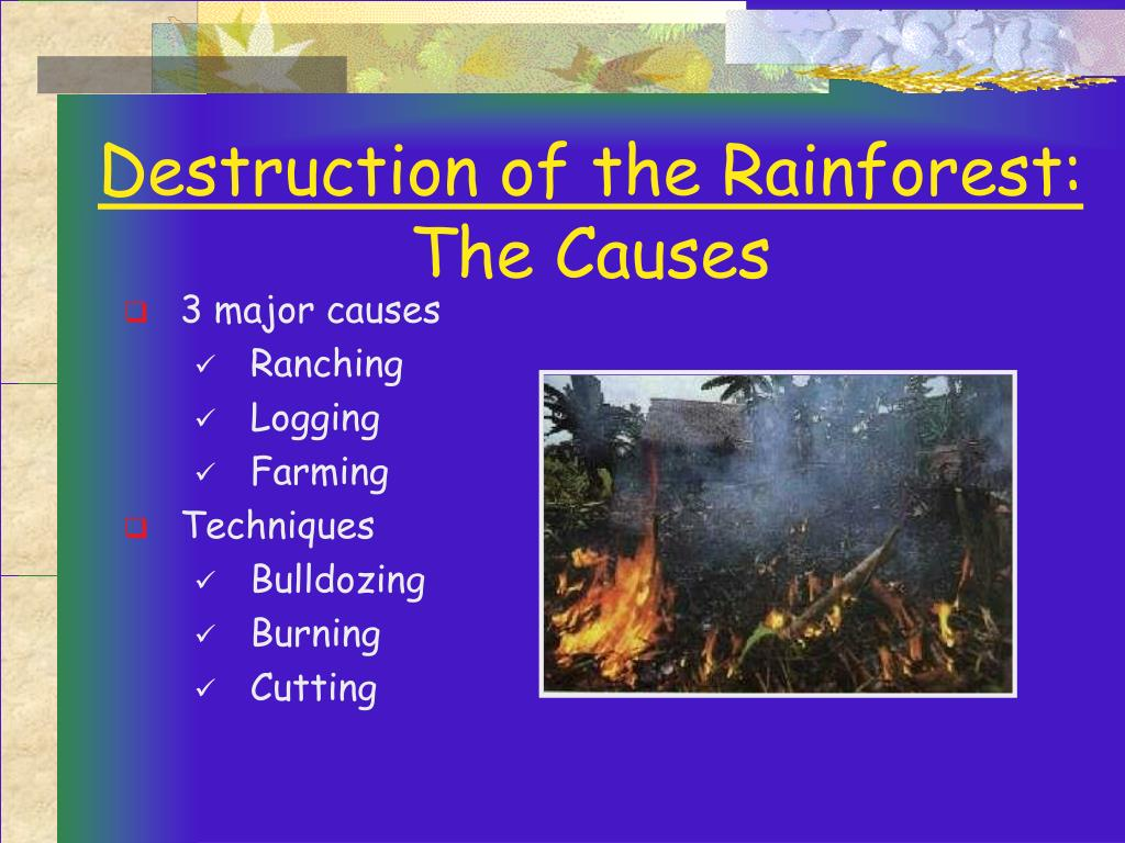 the destruction of the rain forests Rainforests are an asset to the entire world the destruction of rainforests worldwide is a problem because it eliminates habitat for wild life and depletes the earth of vital environmental services.