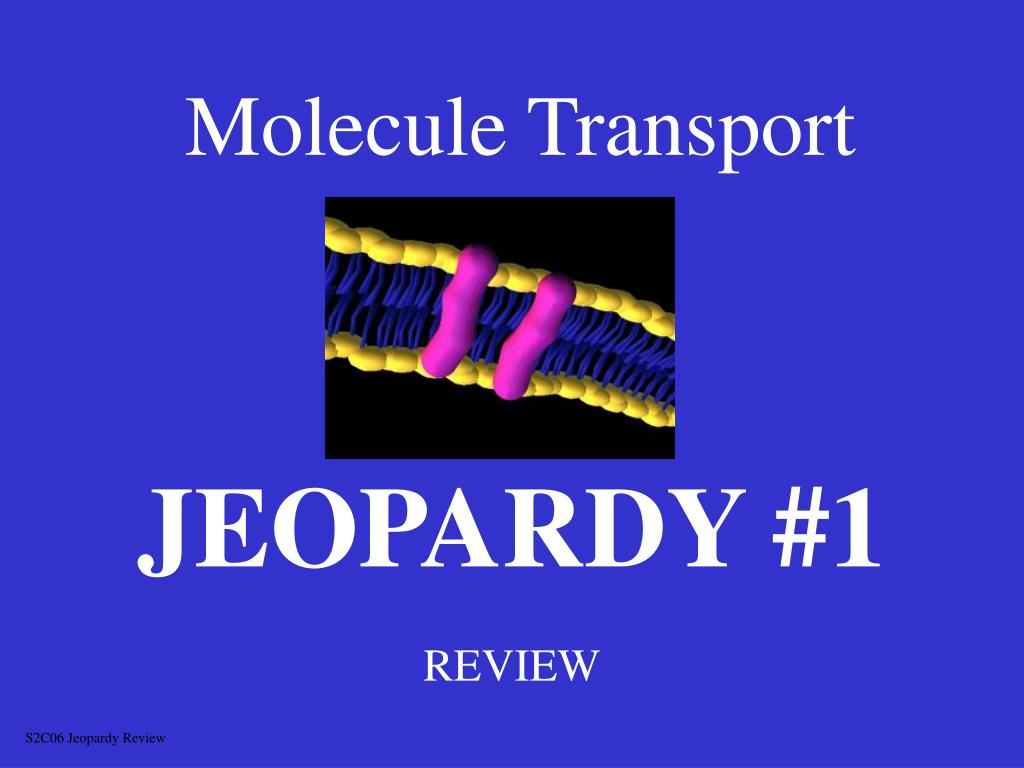 molecule transport l.