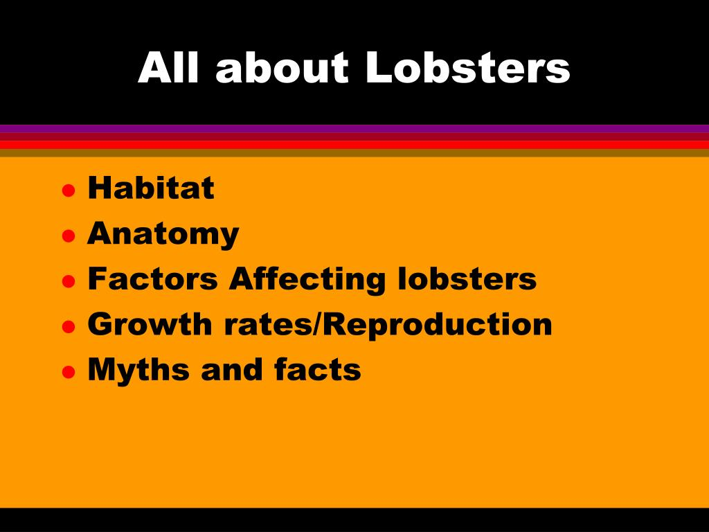 All about Lobsters