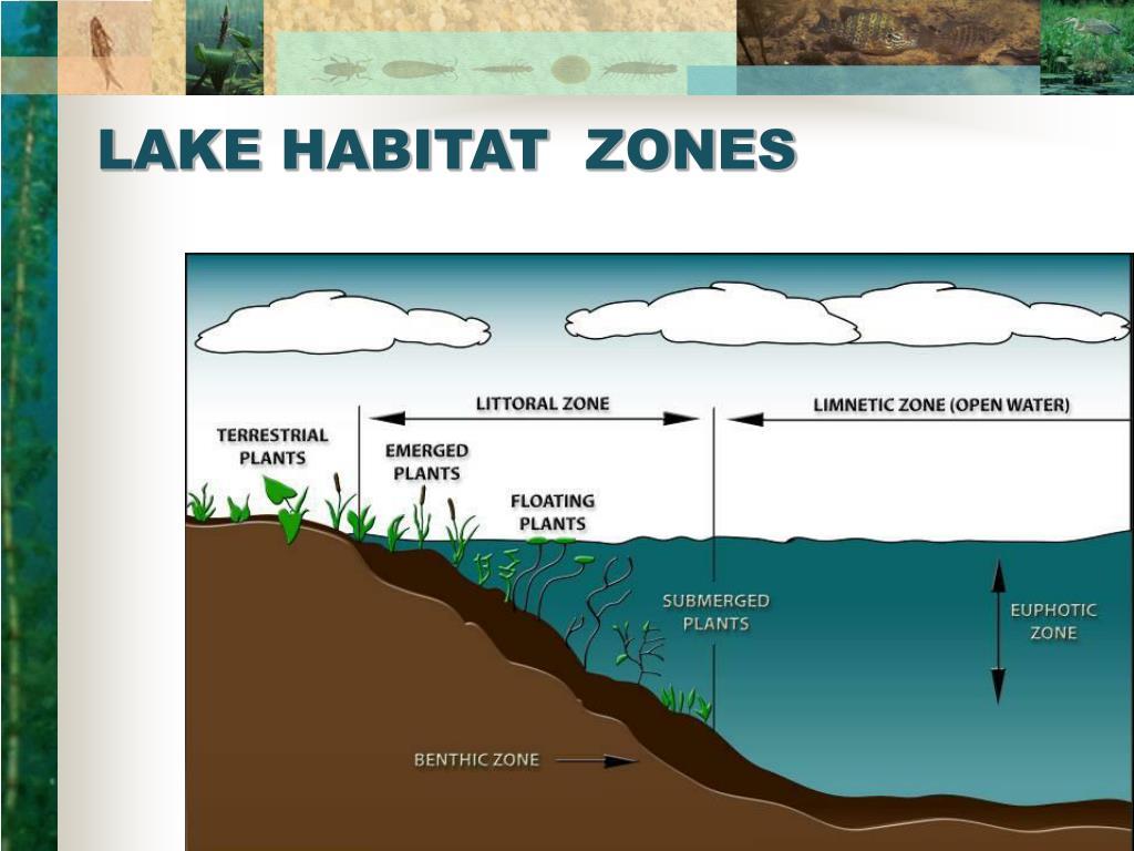 LAKE HABITAT  ZONES