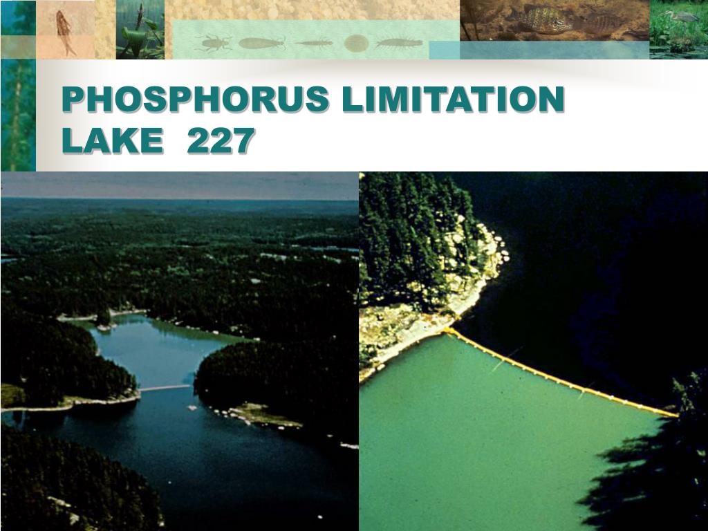 PHOSPHORUS LIMITATION